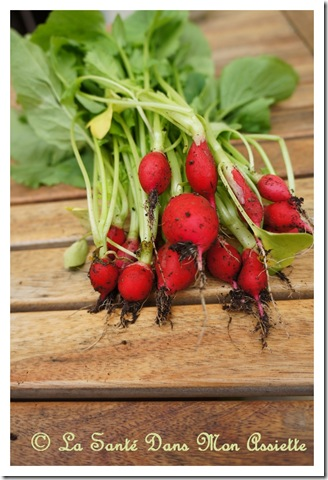 bottederadis thumb Fanes de radis : le pesto