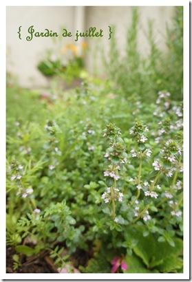 jardindejuillet thumb Fanes de radis : le pesto