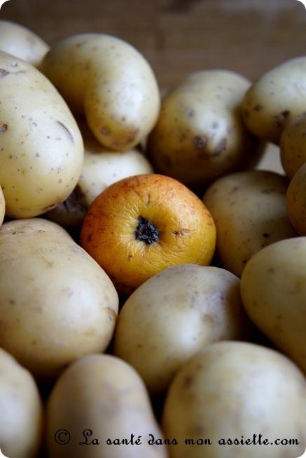 Comment conserver les pommes de terre - Comment conserver le radis noir ...