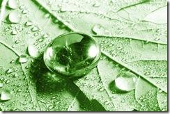 goutte d eau thumb Combien doit on boire deau par jour ?